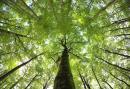 Brangiai nupirkčiau mišką visoje Lietuvoje