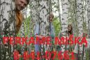 Perka mišką su žeme ar išsikirsti 8-641-07661